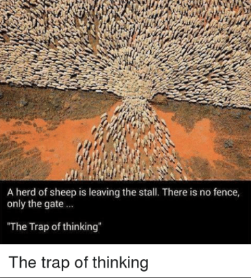 sheep at the gate