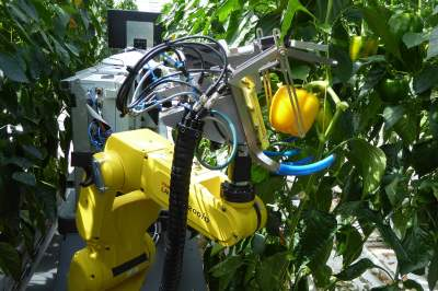 Sweepbot, a yellow-painted machine that rolls through fields and picks ripe peppers.