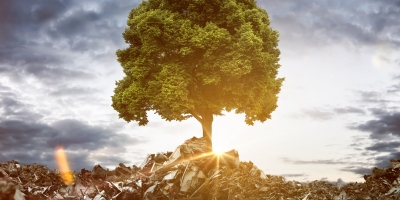 cover image from The Onuissance Cells: A tree grows out of a pile of trash
