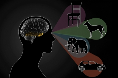 a brain distinguishes between different objects